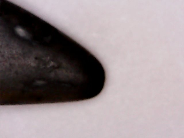 tip of shark tooth